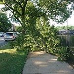 Tree Debris Clean-Up Request at 6647 N Damen Ave